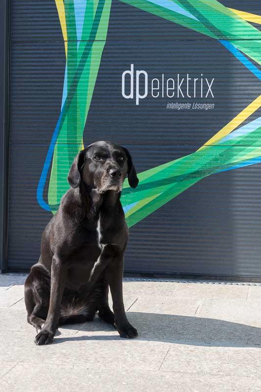 Vacca, unser Haushund und Controller bei dpelektrix Elektrotechnik in 5120 Haigermoos